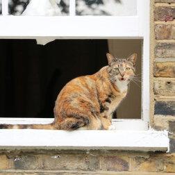 Kotka przyszła do kawiarni, zaczęła drapać okna i miauczeć – w ten sposób ona próbowała wezwać ludzi na pomoc