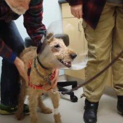 Po operacji oczu niewidomy pies zobaczył swoją rodzinę. To nagranie chwyta za serce