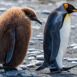 Top 5: maleństwo ptaków, które natychmiast wywołują uśmiech (zdjęcia)