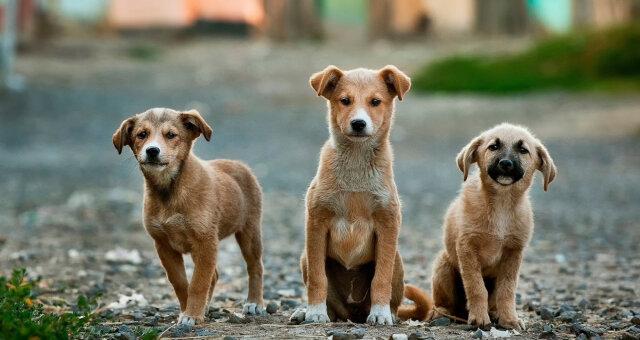 ratowanie psów