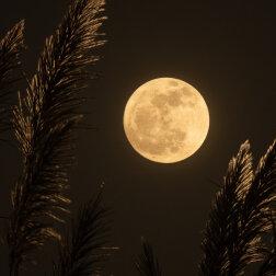Kalendarz księżycowy na maj 2021 r.