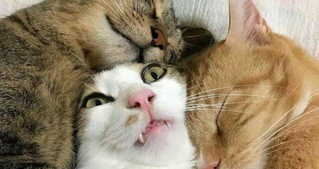 śmieszne psy i koty (foto)