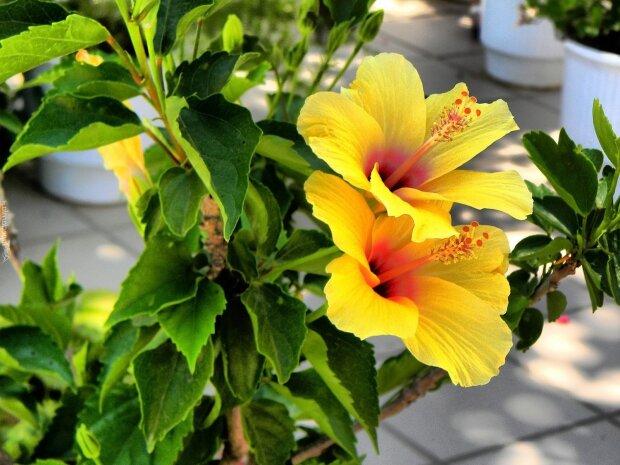 Top 3 Kwiaty Ktorych Lepiej Unikac Mozesz Miec Przez Nie Pecha