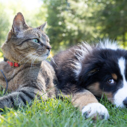 Pies rozpoznał zaginioną kotkę z ogłoszenia