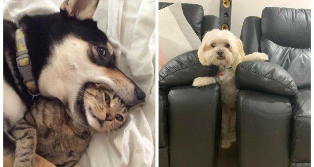 śmieszne zdjęcia zwierzaków