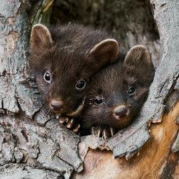 Top 8: niezwykle urocze małe dzikie zwierzęta (zdjęcia)