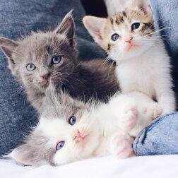 Zmęczona kocia matka zostawiła swoje kocięta z babcią