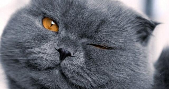 kot ogląda kreskówkę