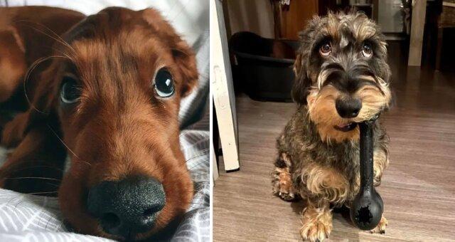 psy o słodkich oczach