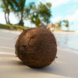 Pomarańcze, kokosy i deszczówka: dieta dwóch współczesnych Robinsonów Kruzoe