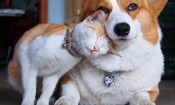 wielka przyjaźń