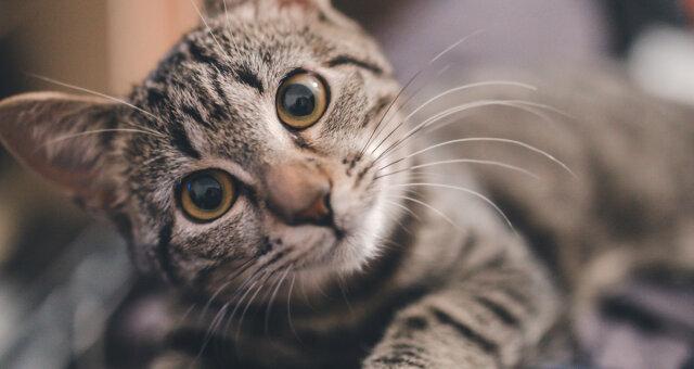 kot myje podłogę