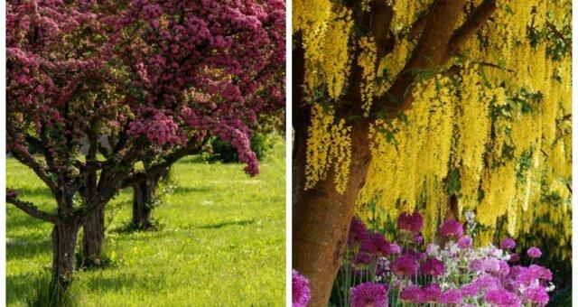 drzewka ozdobne do ogrodu