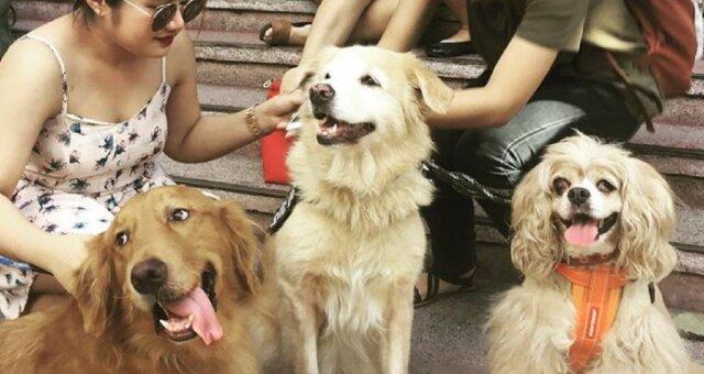 niewidomy pies